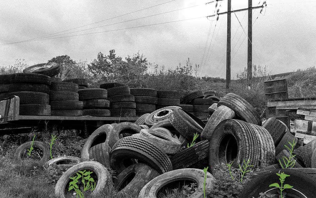 Llantas abandonadas y sin reciclar con plantas saliendo de ellas